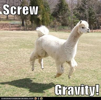 screw this,floating,Gravity,llamas