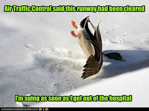 ruway,hospital,suing,air traffic control,ducks,crash,flying