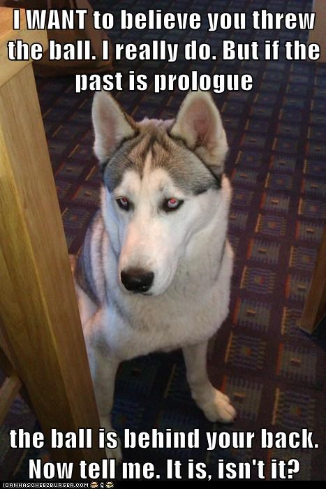 fetch dogs husky ball skeptical dog threw - 6833500928
