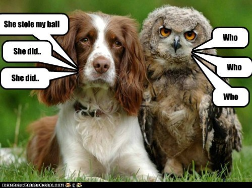 hoot dogs owls confused who