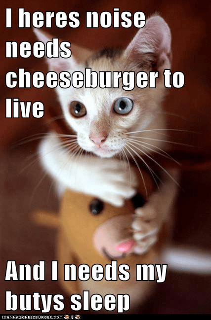 Cheezburger Image 6833898240