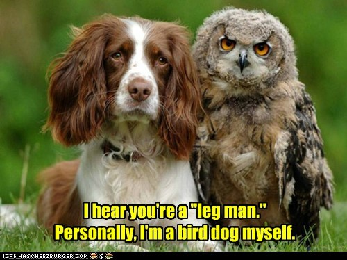dogs birds expression owls personally legs - 6833963776