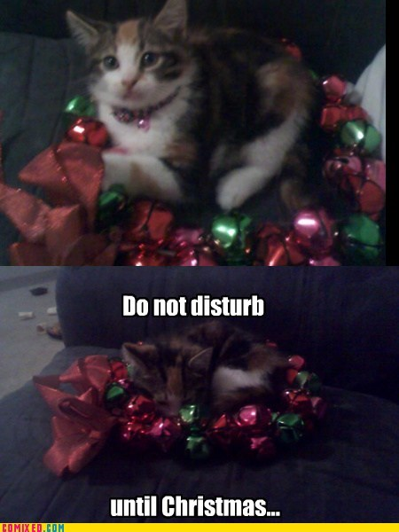 shhhh,christmas,cat,cute,do not disturb,sleeping