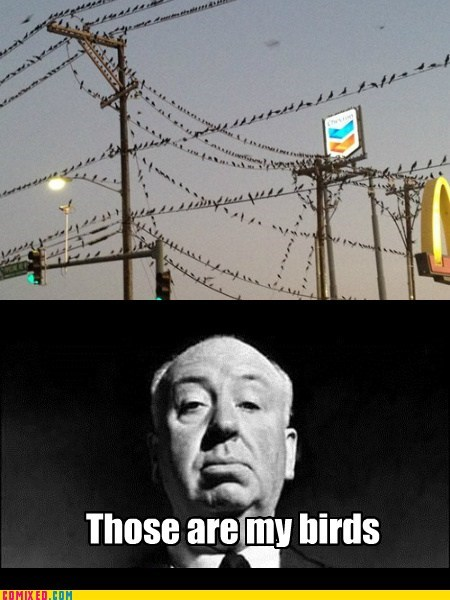 Movie alfred hitchcock the birds