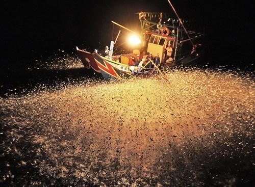 nature Taiwan fish - 6834243328
