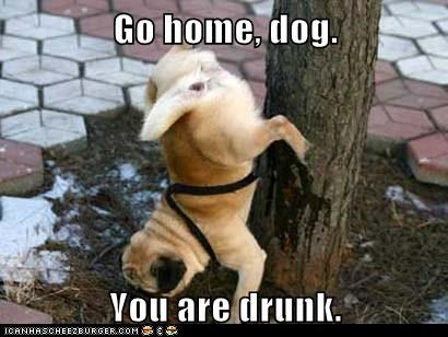 Go home, dog.  You are drunk.