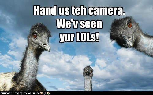 emus,Staring,lols,hand it over,camera,not funny