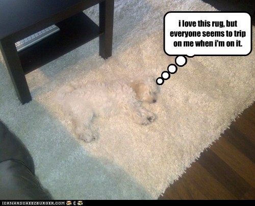 dogs tripping Fluffy rug camouflage what breed - 6834750464