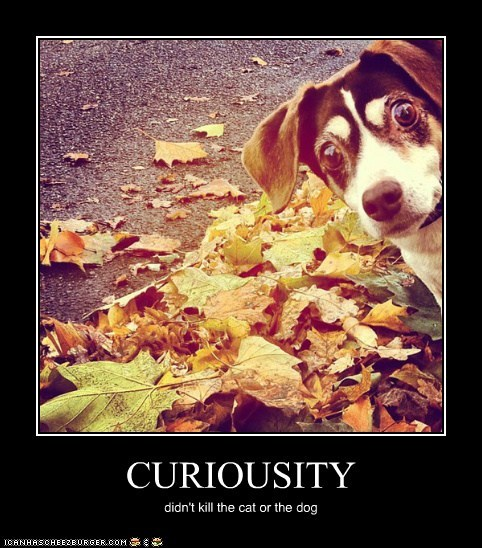 CURIOUSITY didn't kill the cat or the dog