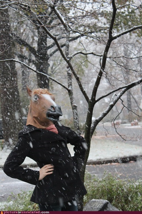 snow,horse head mask,fabulous