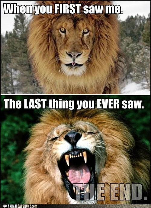 lions,last thing,ever,first,first impressions,dead,eating you