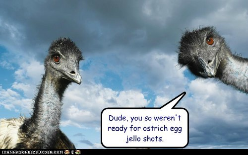 Dude, you so weren't ready for ostrich egg jello shots.