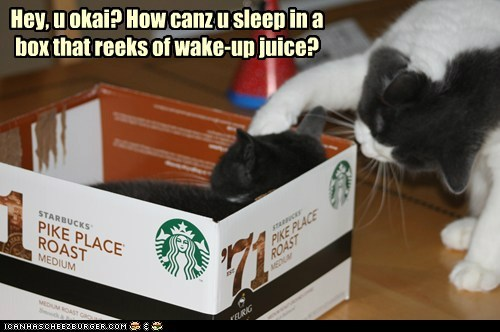caffeine box captions morning coffee sleep Cats - 6835950336