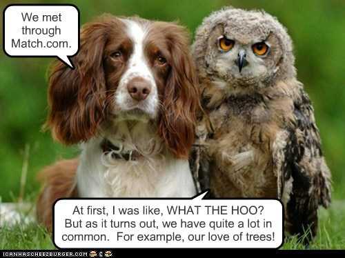odd couple,dogs,spaniel,birds,Owl,dating,Match.com