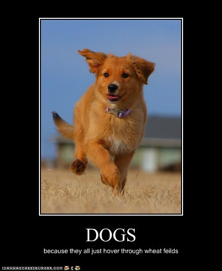 DOGS because they all just hover through wheat feilds