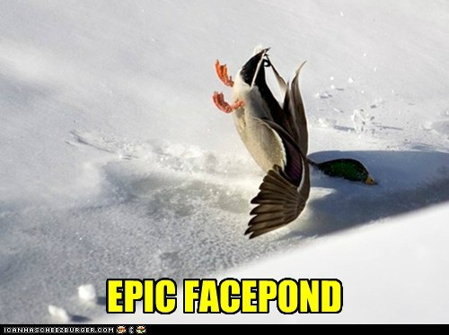 face facepalm puns ducks pond crash - 6836410368