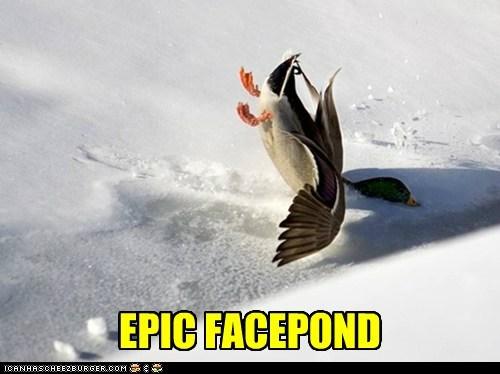 face facepalm puns ducks pond crash - 6836410368