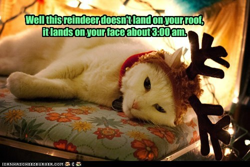 christmas roof face reindeer jump captions morning sleep Cats - 6836620032