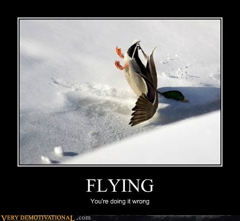 duck snow wrong flying