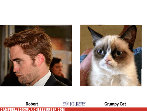 Robert totally looks like Grumpy Cat