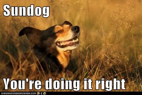 dogs smiling happy sundog doing it right Sundog what breed - 6836903680