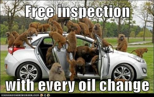 monkeys,car,oil change,inspection,free