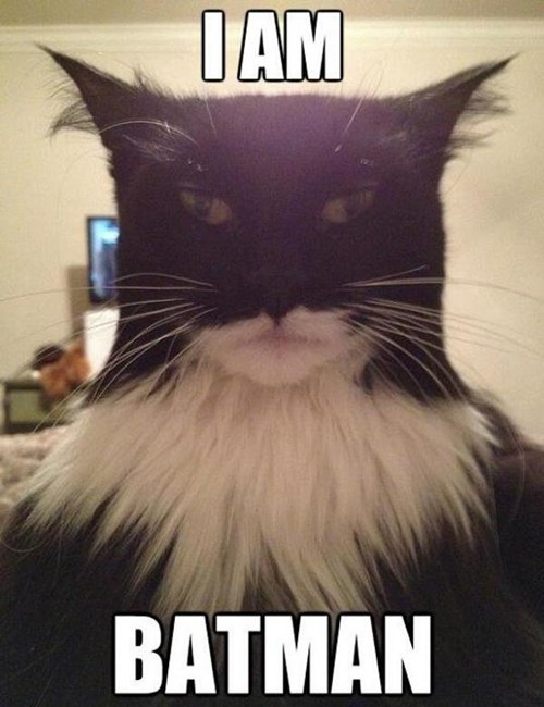 look alikes captions batman Cats - 6837369344