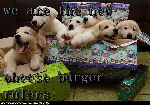 Cheezburger Image 6837438464