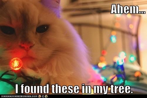 christmas 12 days of catmas captions tree Cats catmas - 6837558016