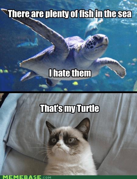 hate,fish,Grumpy Cat,grumpy turtle