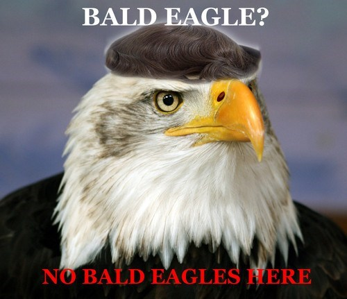 toupee denial no bald eagle