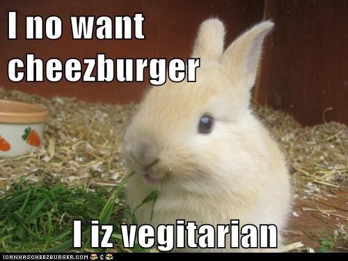 Cheezburger Image 6838308352