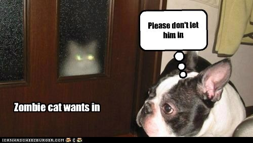 Please don't let him in Zombie cat wants in