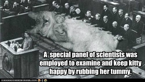 A special panel of scientists was employed to examine and keep kitty happy by rubbing her tummy.