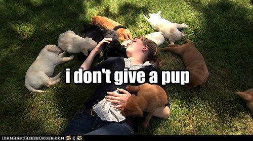 dogs puppies captions lolwork - 6838987520