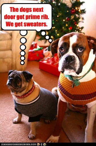 dogs,gifts,pug,sweaters,christmas tree,prime rib,boxer