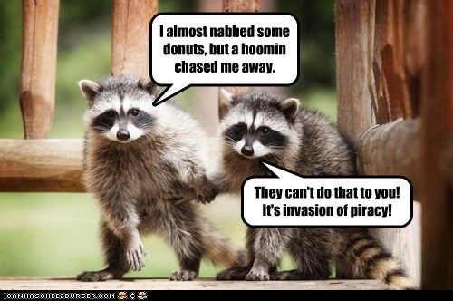I almost nabbed some donuts, but a hoomin chased me away. They can't do that to you! It's invasion of piracy!