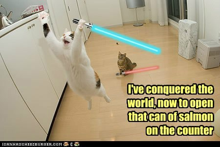 star wars,lightsabers,captions,conquer,salmon,can,dinner,food,Cats