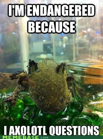 endangered species,axolotl,puns