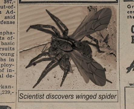 spiders,news,wings,science,the end is nigh,flying