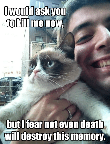 kill me now,Death,memories,captions,Memes,grumpy,Grumpy Cat,tard