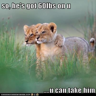 lions encouragement bigger fight friend cubs - 6842822400