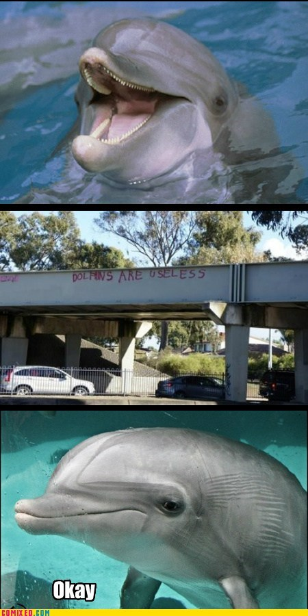 useless,dolphins,graffiti,animal