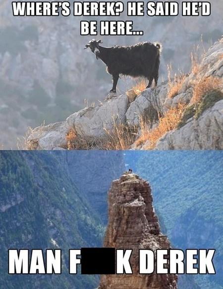 goat,climbing,derek,stood up