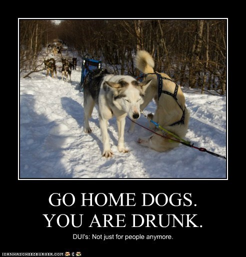 GO HOME DOGS. YOU ARE DRUNK. DUI's: Not just for people anymore.