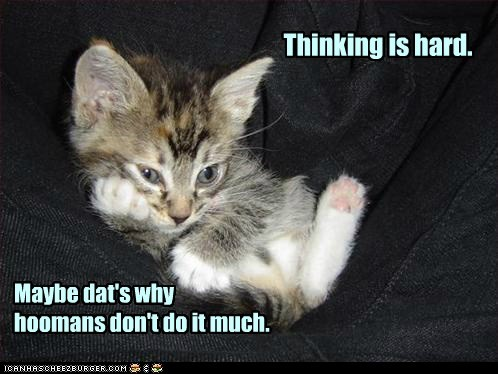 smart captions attitude think dumb ponder Cats
