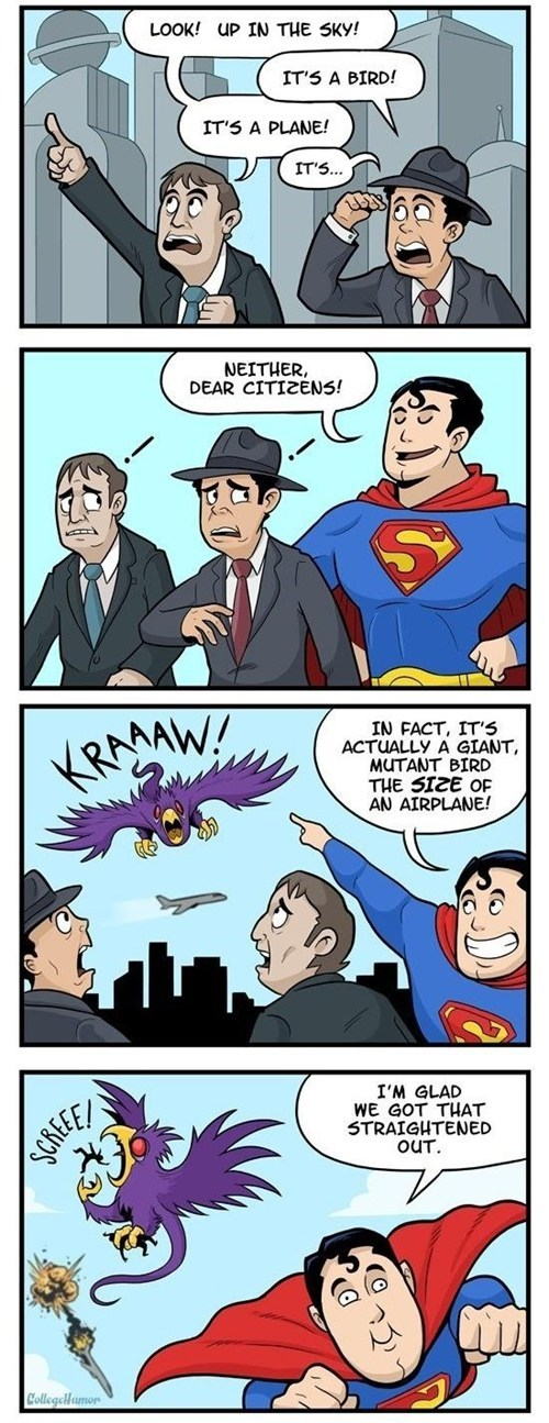 horrible confusing bird superman - 6843993600