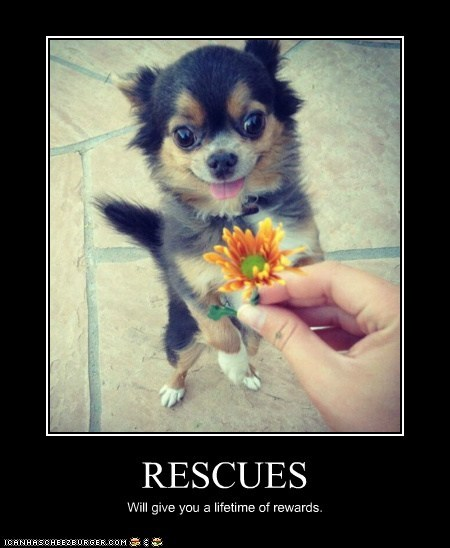 RESCUES Will give you a lifetime of rewards.