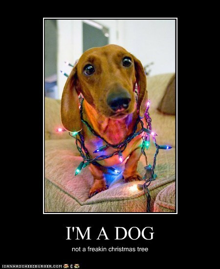 I'M A DOG not a freakin christmas tree