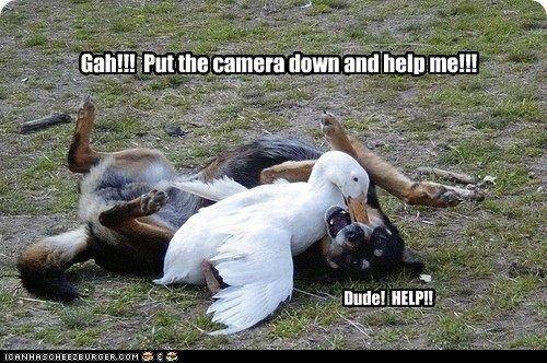 Gah!!! Put the camera down and help me!!! Dude! HELP!!